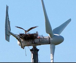 eagle_nest_on_turbine